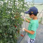 ☆会津若松で楽しむあさたび☆ 朝採り会津トマト収穫体験ツアー♪