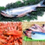 【年末買出し】年末寺泊鮮魚ショッピング&特製お刺身定食の昼食