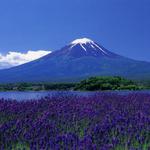 河口湖ハーブフェスティバル、忍野八海と富士山麓・浅間神社三社巡り
