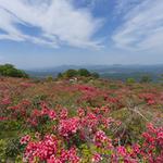高柴山ハイキングと高柴デコ祭り