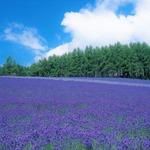 富良野、美瑛と旭山動物園、札幌を巡る旅