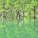 幻想的な光景が広がる白川湖の水没林と熊野大社参拝、米沢牛の昼食