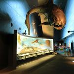 県内学習ツアー!ファミリーに最適!化石館ほるるとアクアマリンふくしまの旅